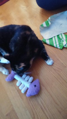 Aww...Santa brought Roxie catnip fish bones