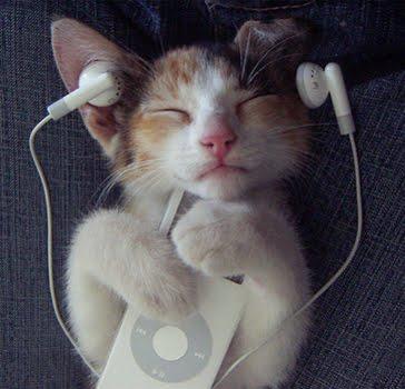cat2bpod